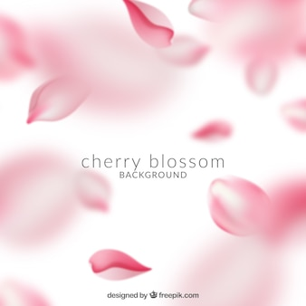 Beautiful pink cherry blossom background