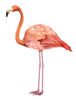 Beautiful pink flamingo standing. for banners, posters, leaflets and brochures.
