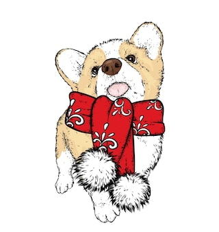 A beautiful puppy in a winter scarf. new year's and christmas.