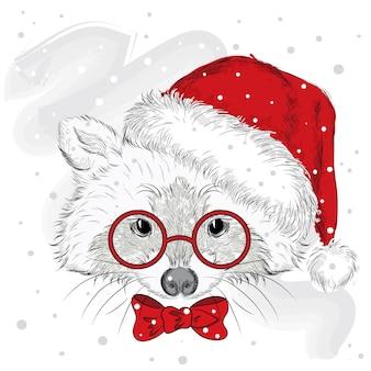クリスマスの服と新年の美しいアライグマ