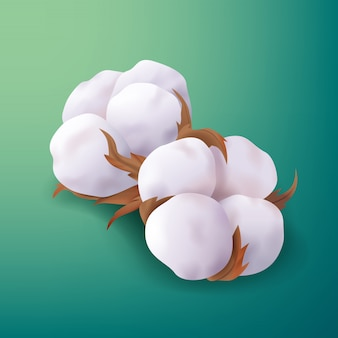 Beautiful realistic cotton plant flowers isolated on blue green background