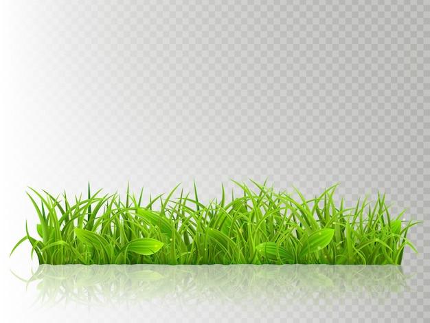 Красивая реалистичная подробная свежая зеленая трава, на прозрачном фоне. весной или летом объект готов к использованию.