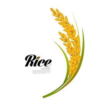 아름 다운 현실적인 쌀 그림