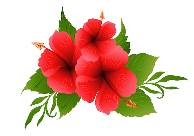 美しい赤いハイビスカスの花のデザイン