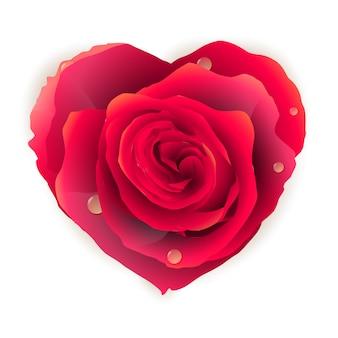美しい赤いバラのハート。