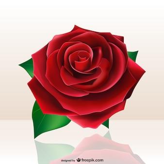 Beautiful red rose Premium Vector