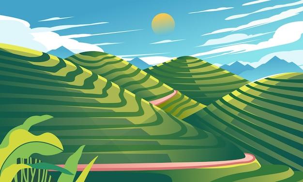 Красивое рисовое поле пейзаж иллюстрация долины вверх и вниз и голубое небо