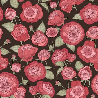 Beautiful romantic seamless pattern with blooming austin roses on black background.