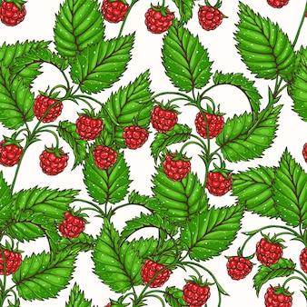 赤いおいしいラズベリーの枝を持つ美しいシームレスな背景