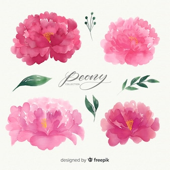 Beautiful set of peony flowers