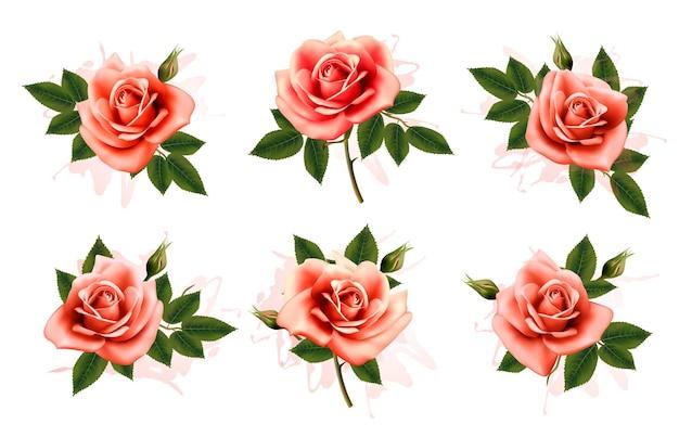 葉とピンクの華やかなバラの美しいセット。ベクター。