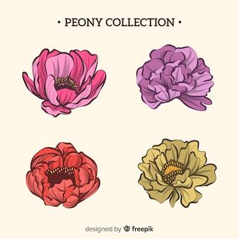 Beautiful set of peony flowers