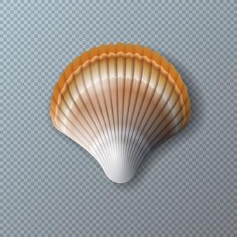 Bella shell isolata su trasparente