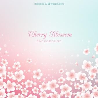 Красивый блестящий цвет вишни