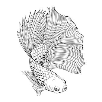 Красивая сиамская бойцовая рыба