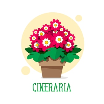 Красивые весенние цветы цинерарии в горшке. векторная иллюстрация
