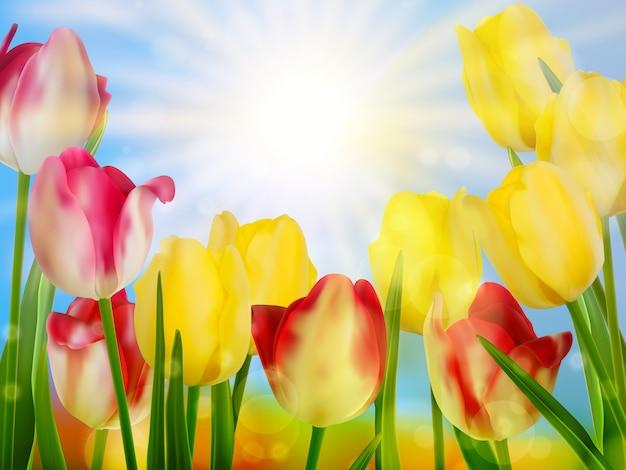 Красивые весенние цветы.
