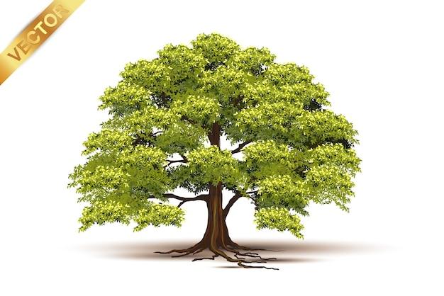 Красивое дерево реалистично на белом фоне