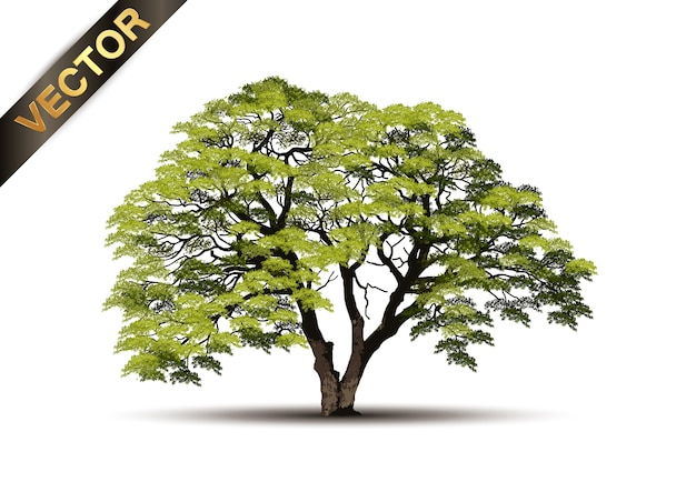 Beautiful tree realistic  on a white background
