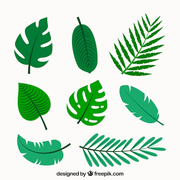 leaf vectors photos and psd files free download rh freepik com banana leaf vector art maple leaf vector art