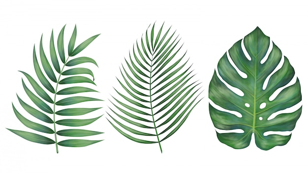 Beautiful tropical leaves