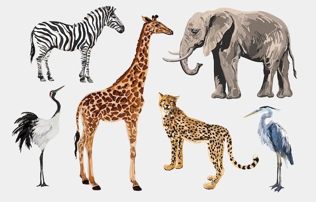 Beautiful tropical vintage illustration clip art background with zebra giraffe leopard