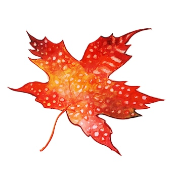 Beautiful watercolor autumn leaf