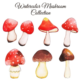 Beautiful watercolor autumn mushroom collection