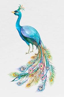 아름다운 수채화 푸른 공작