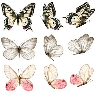 Коллекция красивых акварельных бабочек в разных позициях