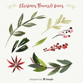 Beautiful watercolor christmas flowers and leaves collection
