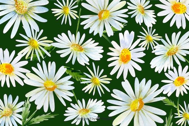 Beautiful watercolor daisy flower background