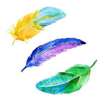 Beautiful watercolor feather collection