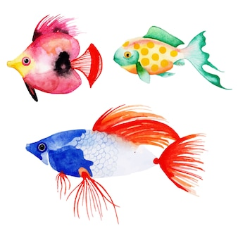 Beautiful watercolor fish collection