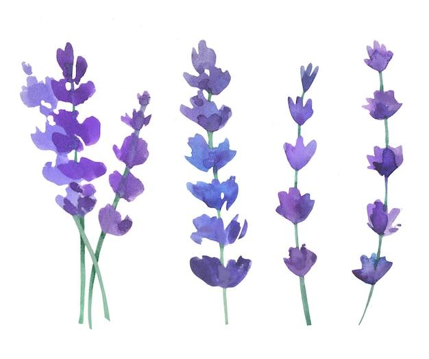 美しい水彩画のラベンダーの花。