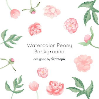 Beautiful watercolor peony flowers background