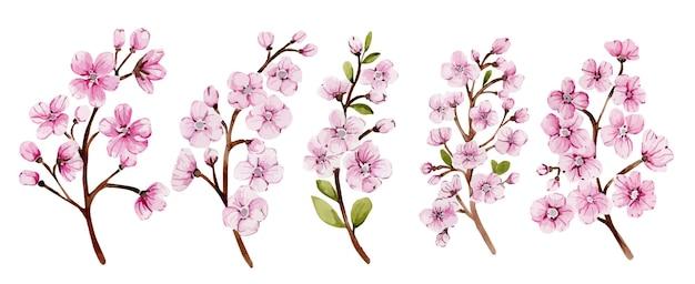 Beautiful watercolor twigs of blooming pink sakura