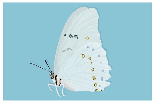 아름다운 흰 나비 손으로 그린