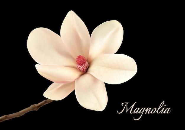 黒の背景に分離された美しい白いモクレンの花。ベクター。