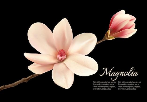 Красивый белый цветок магнолии, изолированные на черном фоне.