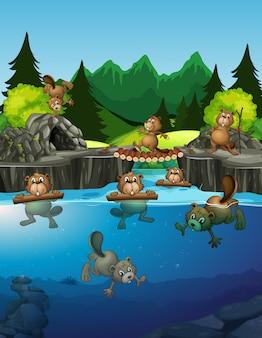 호수에 사는 비버