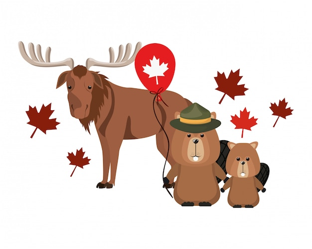 Beaver and moose animal of canada