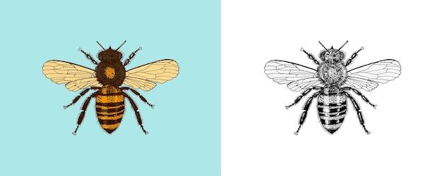 Пчела и мед медовуха и насекомых вектор выгравированы рисованной старинный старый эскиз для футболки или