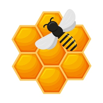 Bee combs with honey and bee.