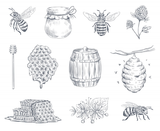 Bee engraving. honey bees, beekeeping farm and honeyed honeycomb vintage hand drawn  illustration set