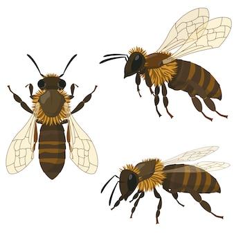 Пчела в разных позах. насекомое в мультяшном стиле.