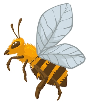 Bee insect bumblebee wildlife and animals vector