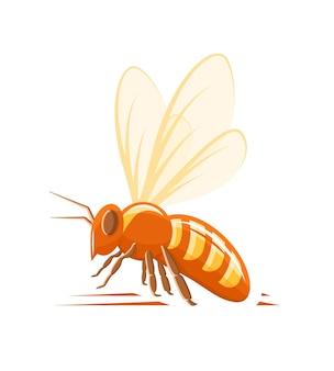 Вид сбоку пчелы, изолированные на белом фоне