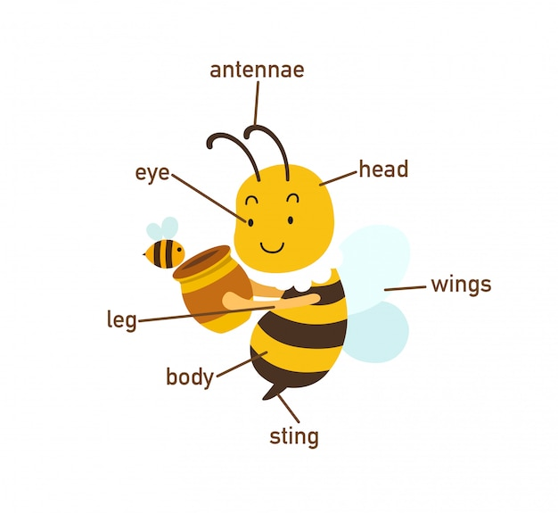 Bee vocabulary part of body.vector