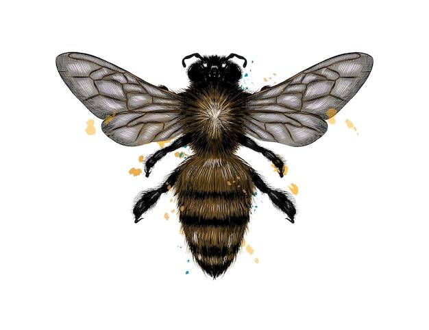 꿀벌, 수채화의 스플래시에서 말벌, 컬러 드로잉, 현실.
